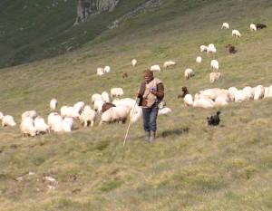 Rumuński pasterz