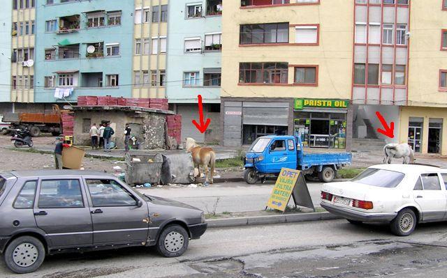 Konie w środku miasta